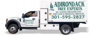 Truck Lettering - Adirondack Tree Experts